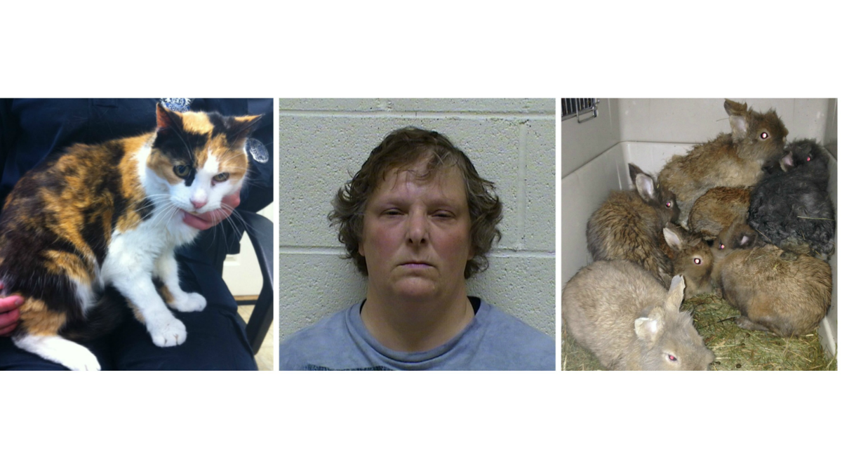Tracy Mailhot, 48 was arrested and charged with animal cruelty. Police are looking for home for her cat and bunnies (L to R)