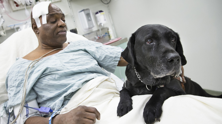 Cecil Williams pets his guide dog Orlando in his hospital bed following a fall onto subway tracks.