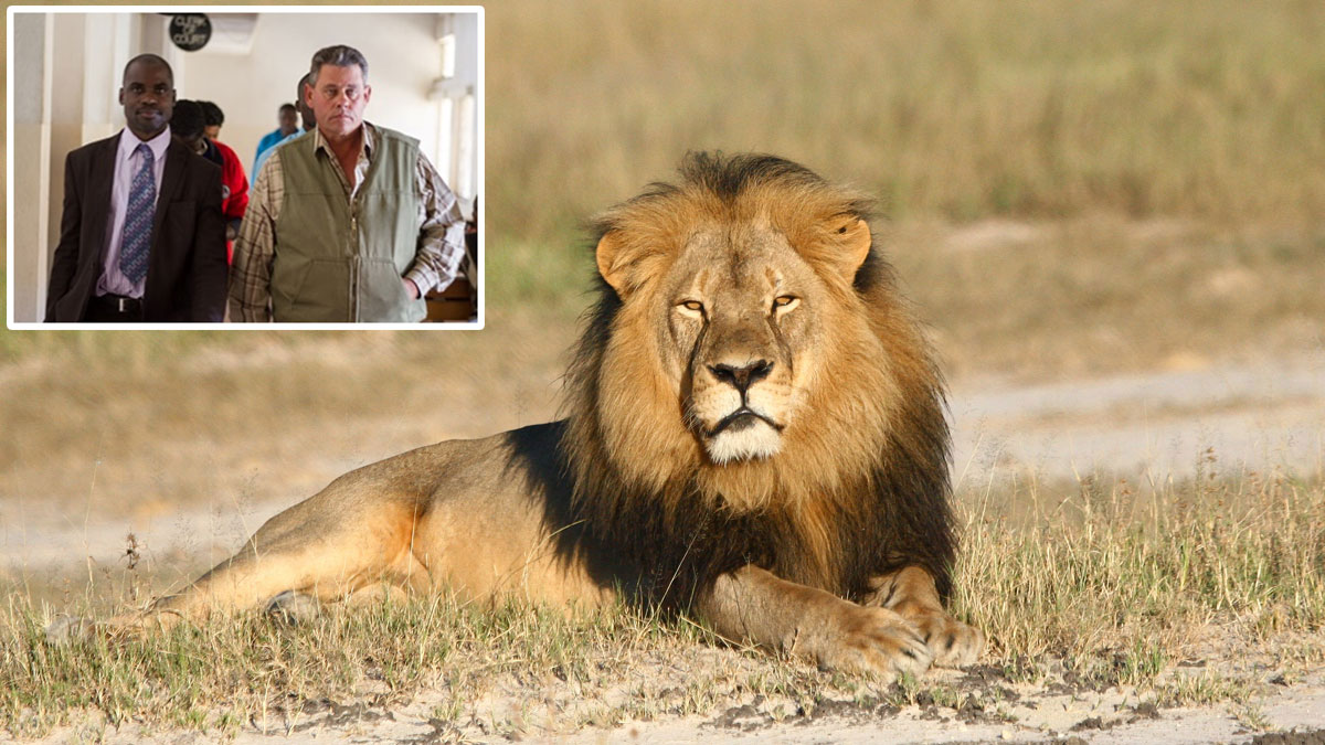 Cecil the lion rests in Hwange National Park, in Hwange, Zimbabwe, in an undated photo. Inset: Theo Bronkhorst (right) arriving at Hwange Magistrate's Court with his lawyer on Wednesday, July 29, 2015.