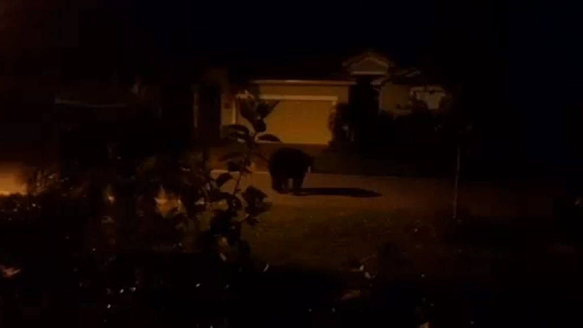 Cell phone image of bear