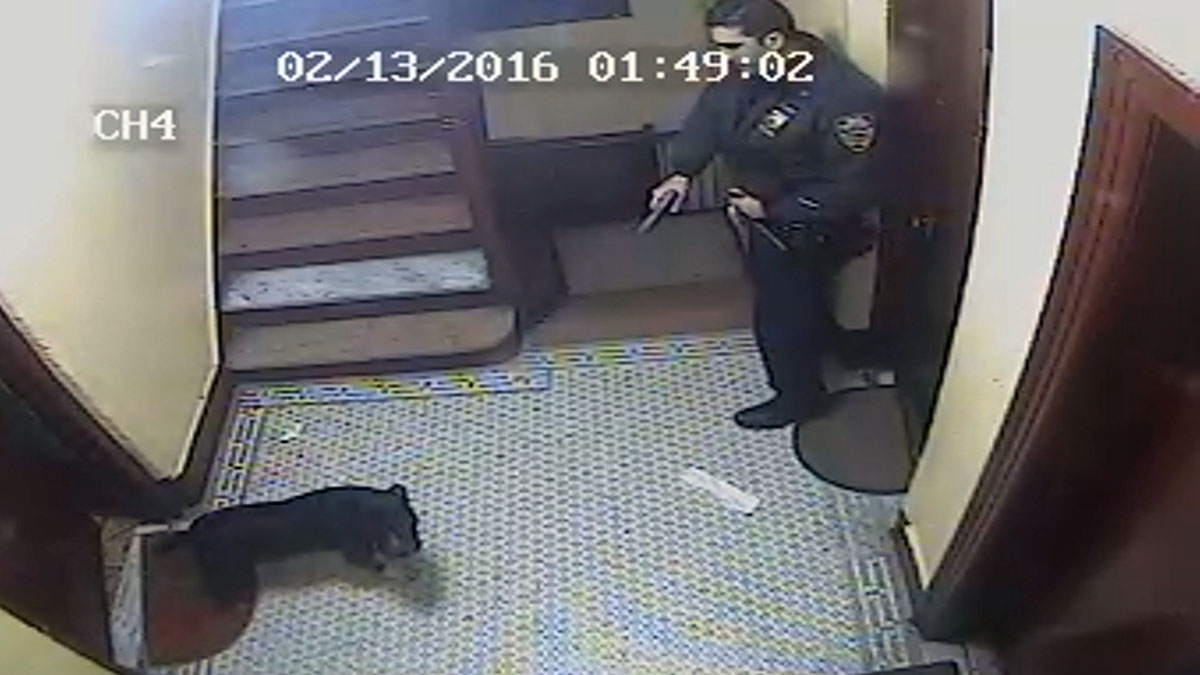 Surveillance footage shows an NYPD officer pointing a gun at a dog identified as Spike, a 4-year-old pit bull.