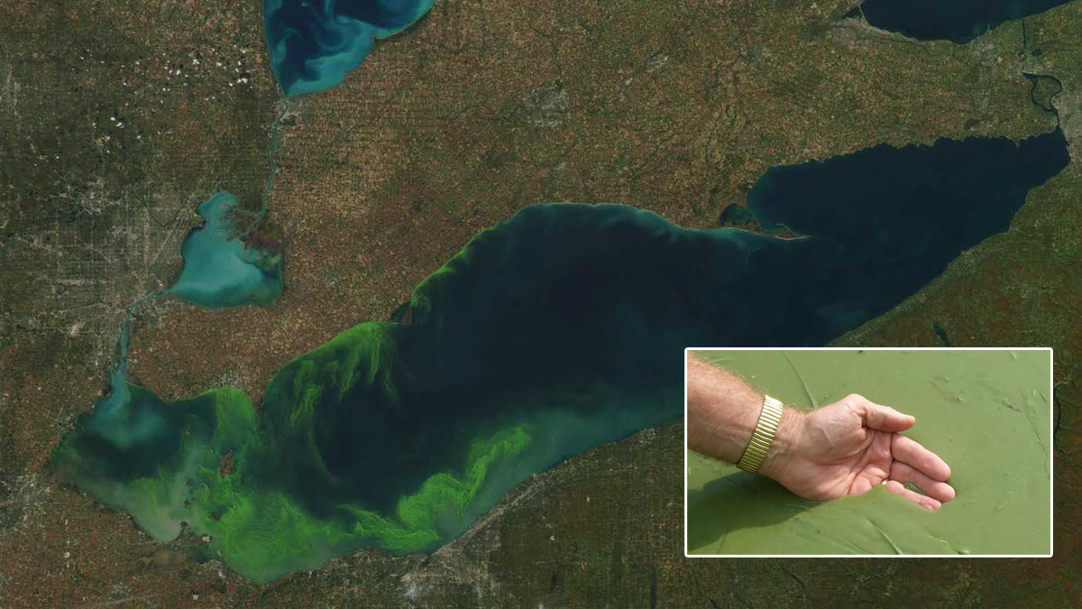 The NOAA satellite image of Lake Erie shows green algae which can be extremely toxic when found in large quantities, like that shown in the inset photo provided by Dr. Jeff Reutter.