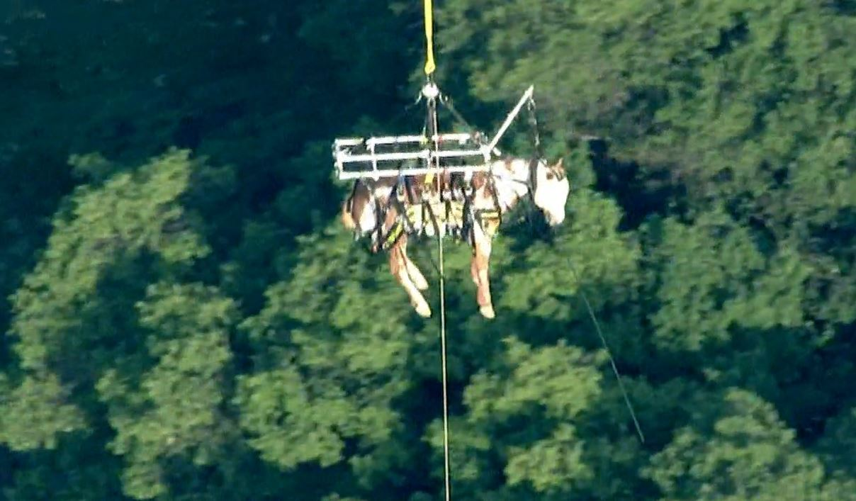A horse took a tumble down a trail and had to be hoisted via helicopter near Sylmar on Saturday, March 19, 2016.
