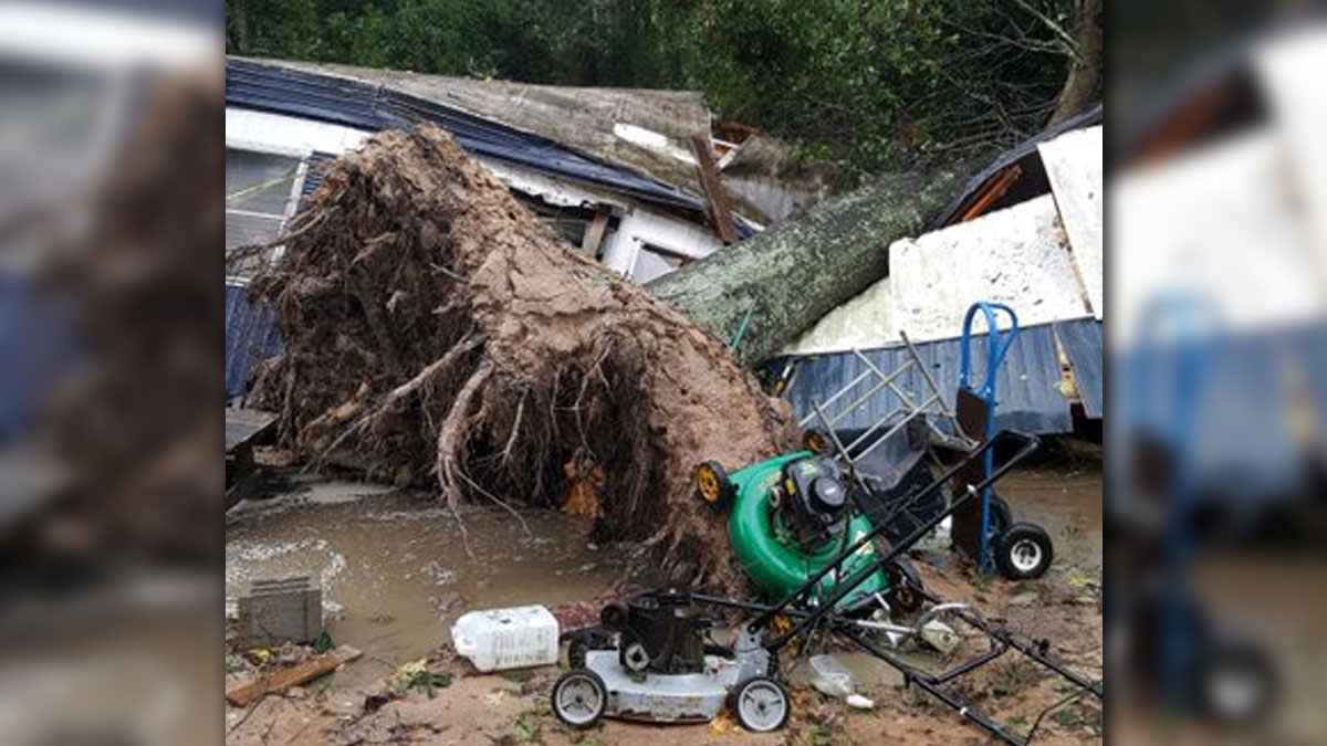 A massive oak tree fell onto a mobile home in Porter, Texas, Monday, killing a 60-year-old woman sleeping inside.