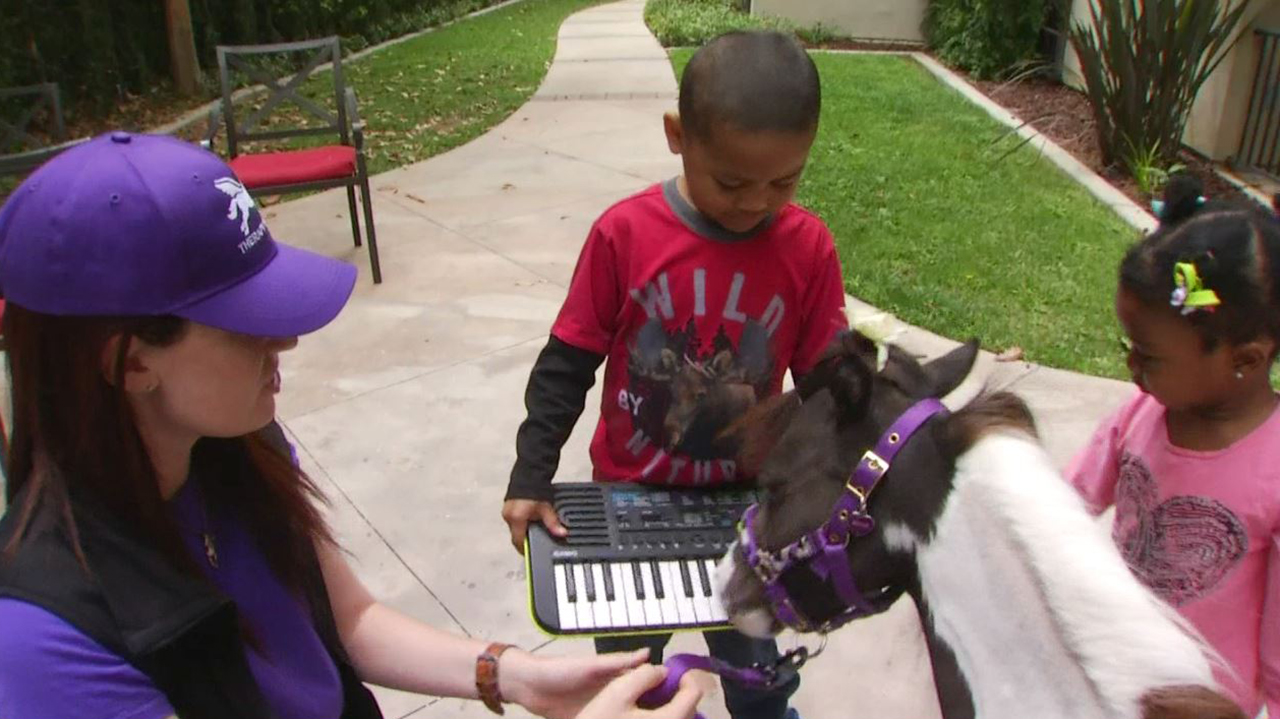 A mini-horse plays the piano for critically ill children at the Ronald McDonald house in Hollywood.