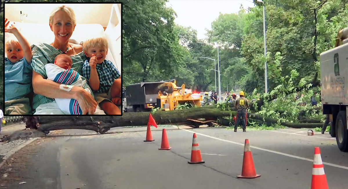The tree that fell in Central Park and injured Anne Monoky Goldman, inset with her three children.