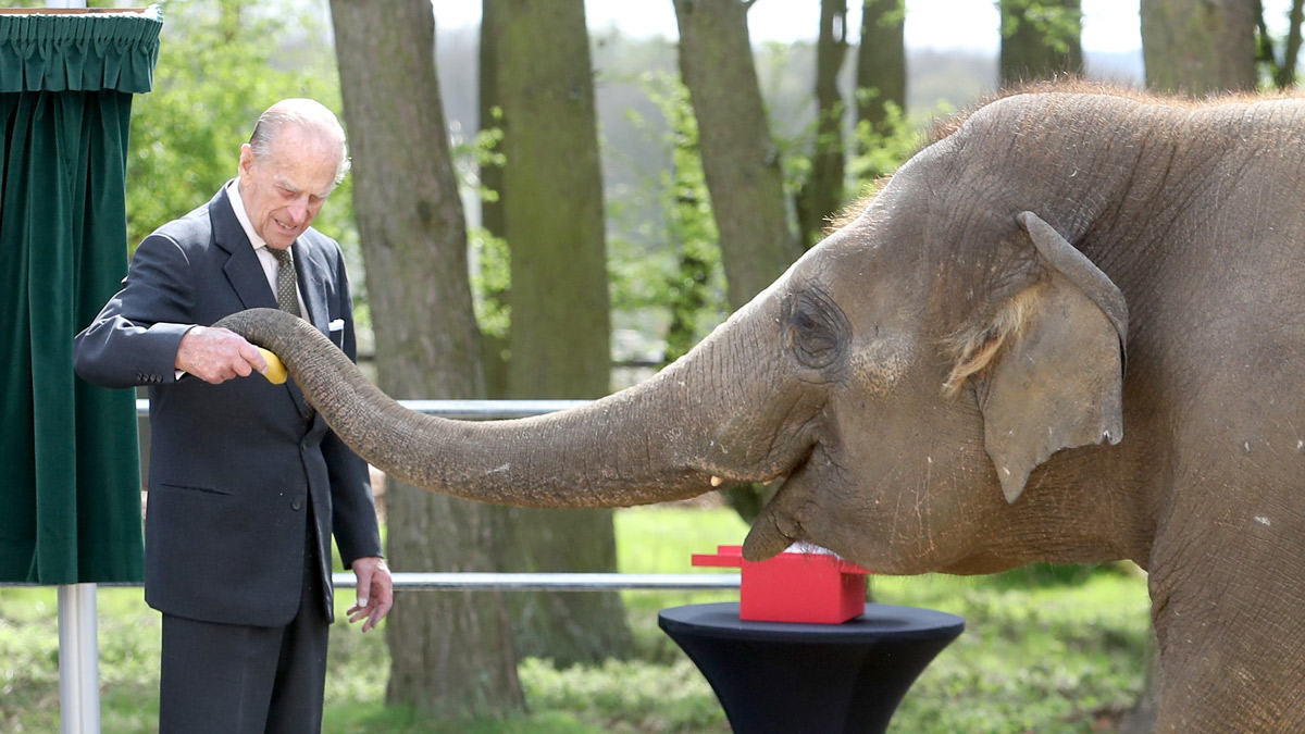 In this April 11, 2017 file photo Prince Philip, Duke of Edinburgh feeds an elephant while visiting the Elephant Centre at the ZSL Whipsnade Zoo in Dunstable, United Kingdom, with Queen Elizabeth II. He announced his retirement from his royal duties on Thursday.