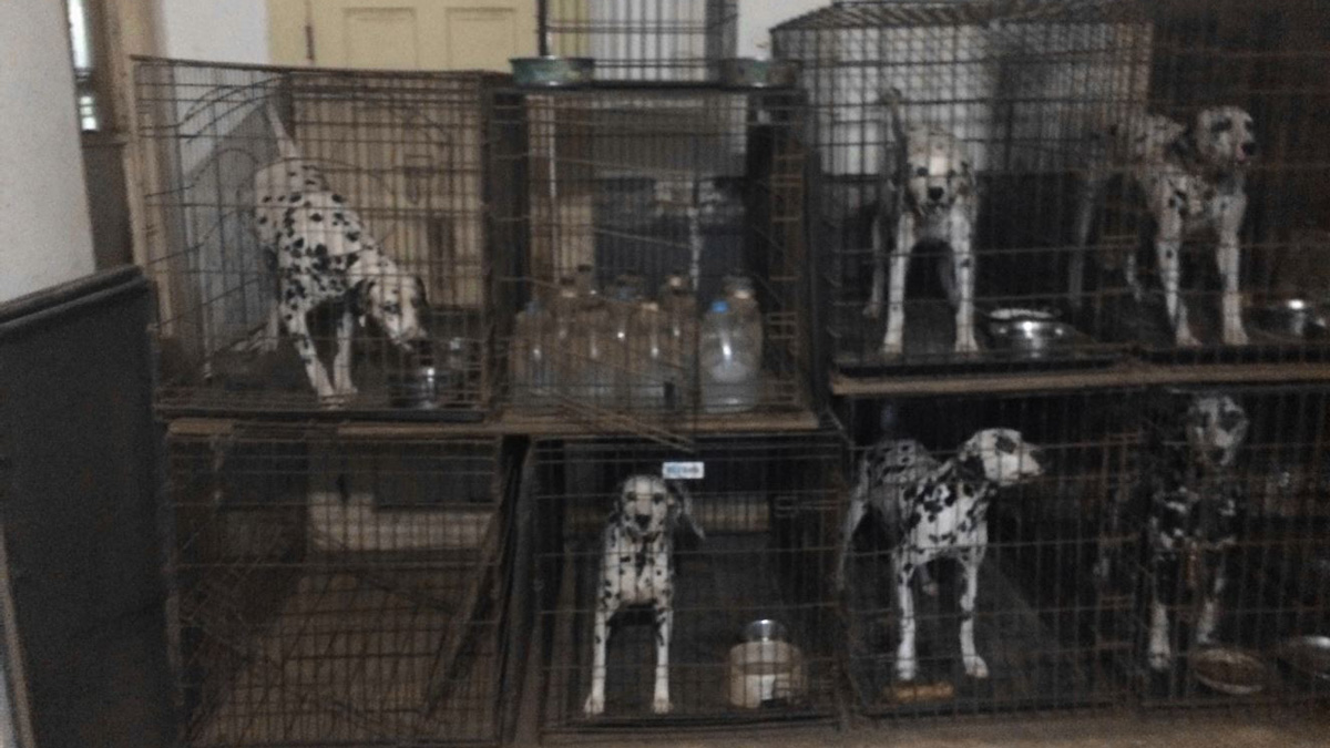Emaciation, Spoiled Food: Puppy Mill Problems Persist