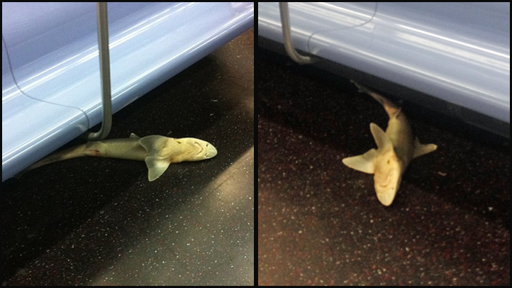 Photos from two witnesses who saw the shark on the N train