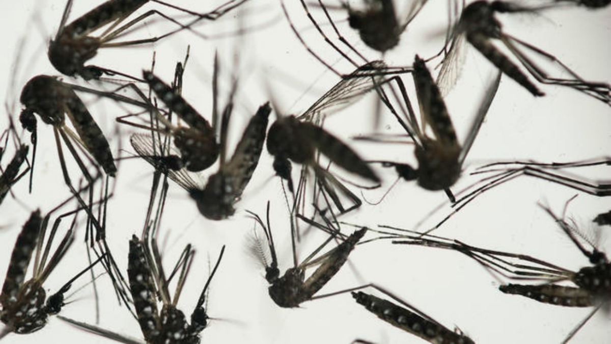 Colombia has over 20,500 cases of Zika infection so far.